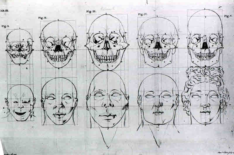 Evolution of the head and skull