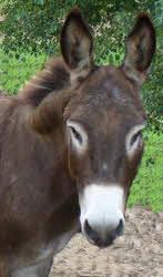 A donkey's head.