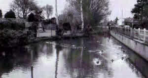 The Duck Pond near to the British School, Earith.