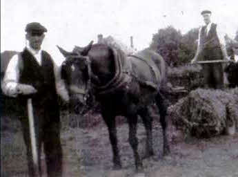 Earith farming work with horses collecting hay.