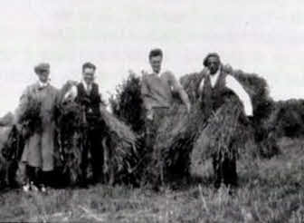 Four Earith farm labourers hand cutting hay.