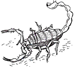 A deadly Scorpion with uplifted tail.